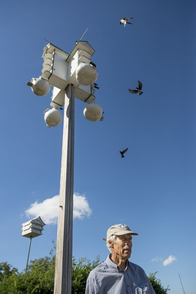 Jack Gulvin gives a Purple Martin Chat at the bird house located between Sports Club and Miller Bell Tower on July 15, 2016. Gulvin takes care of five different bird homes across the grounds. Photo by Sarah Holm