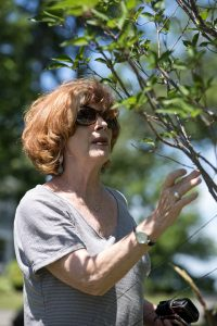 Jon Hackett, wife of Jerome C. Hackett, inspects the growth of the tree planted in her husband's honor in Miller Park.