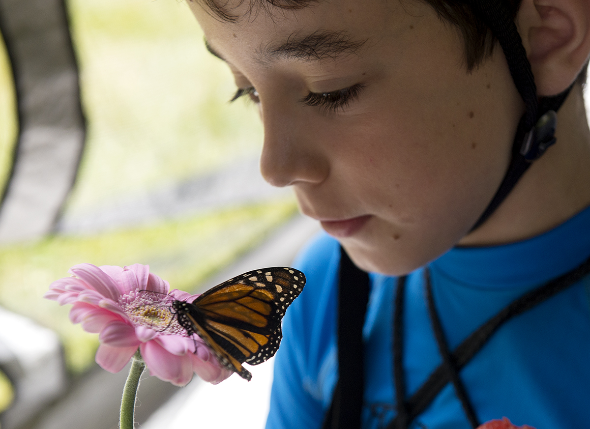 "Paul Ritacco, 9, holds a monarch butterfly on a flower during the ""Open Wide"" program in Lincoln Park on July 8, 2016. The program demonstrated each step of a butterfly's life cycle and allowed people to feed the monarch butterflies. The event was sponsored by Lynda Acker and her husband Jeff in honor of their daughters Caroline and Christina."