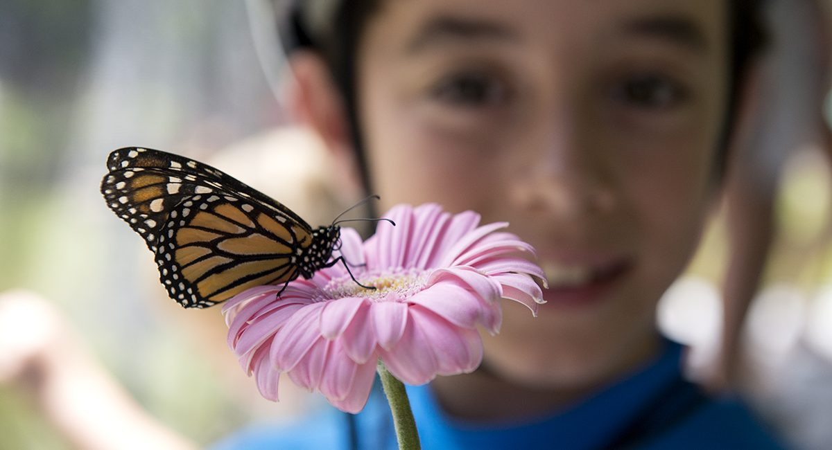 """Paul Ritacco, 9, holds a monarch butterfly on a flower during the """"Open Wide"""" program in Lincoln Park on July 8, 2016. The program demonstrated each step of a butterfly's life cycle and allowed people to feed the monarch butterflies. The event was sponsored by Lynda Acker and her husband Jeff in honor of their daughters Caroline and Christina."""