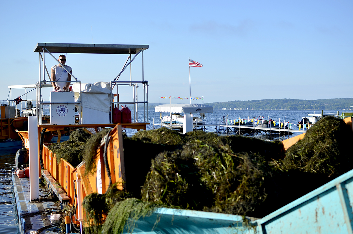 Justin Eddy, an employee of the Chautauqua Lake Association, loads seaweed harvested from Chautauqua Lake into a dump truck. Monday through Friday from 7 a.m. to 3:30 p.m., Eddy steers a seaweed cutting boat around lake, trimming away troublesome patches of thick seaweed.