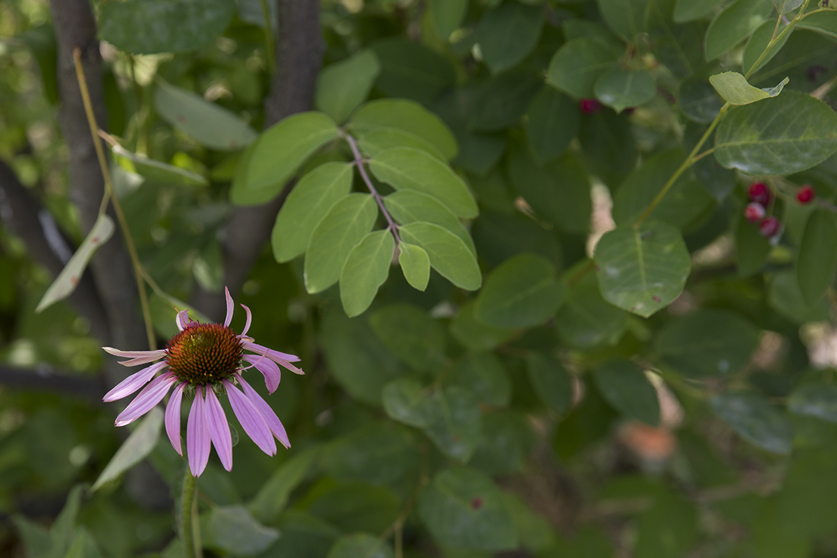 062717_nativeplants_mpo_01