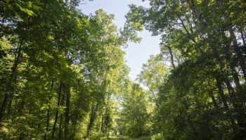 072319_RailstoTrails_SY_01